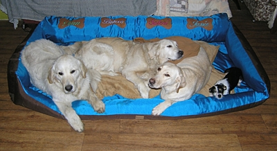 Bracco pet bed, Comfortable Security, with dog-NAME or without, size XL, various colors